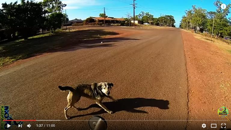 Com actuar quan se't creuen animals a la carretera?