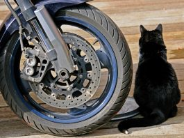 Pneumàtics de moto